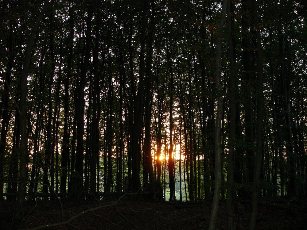 Die Magie der Rügener Buchenwälder