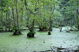 #569 Im Nationalpark sind urige Sümpfe, Tümpel... Foto: Marius Jaster