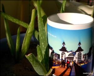 Ja, Aloe Vera-Babys - direkt von der Insel La Palma - gibt es jetzt auch auf Rügen. Und wachsen und gedeihen...an verschiedenen Orten. Aber schau Dir die Tasse an! Warmer Kaffee an jedem Morgen daraus? Ein Genuss! Ach so: Heiraten kannste hier auch noch... auf der Seebrücke Sellin...