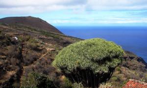 Schroffe Berge und Drachenbäume prägen die Insel La Palma ebenso wie grüne Wälder, aber auch steppenartige Grasflächen.