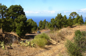 In dieser trocken-kargen Landschaft La Palmas ist besondere Vorsicht mit Feuer, Zigarettenkippen und anderen Zündquellen geboten.