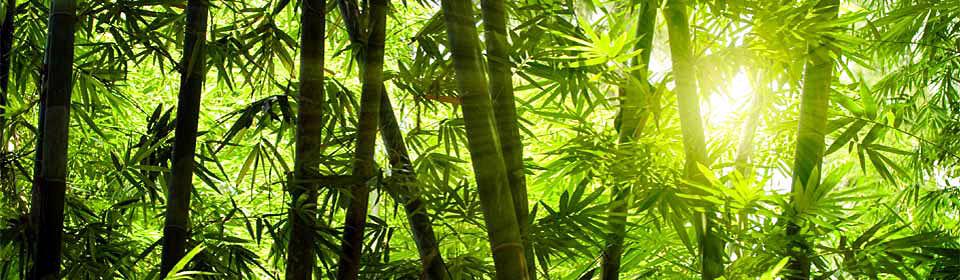 Geduld ist der Grundstein für das Glück. Oder: Schau Dir mal den Bambus an!