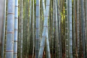 Bambus_02