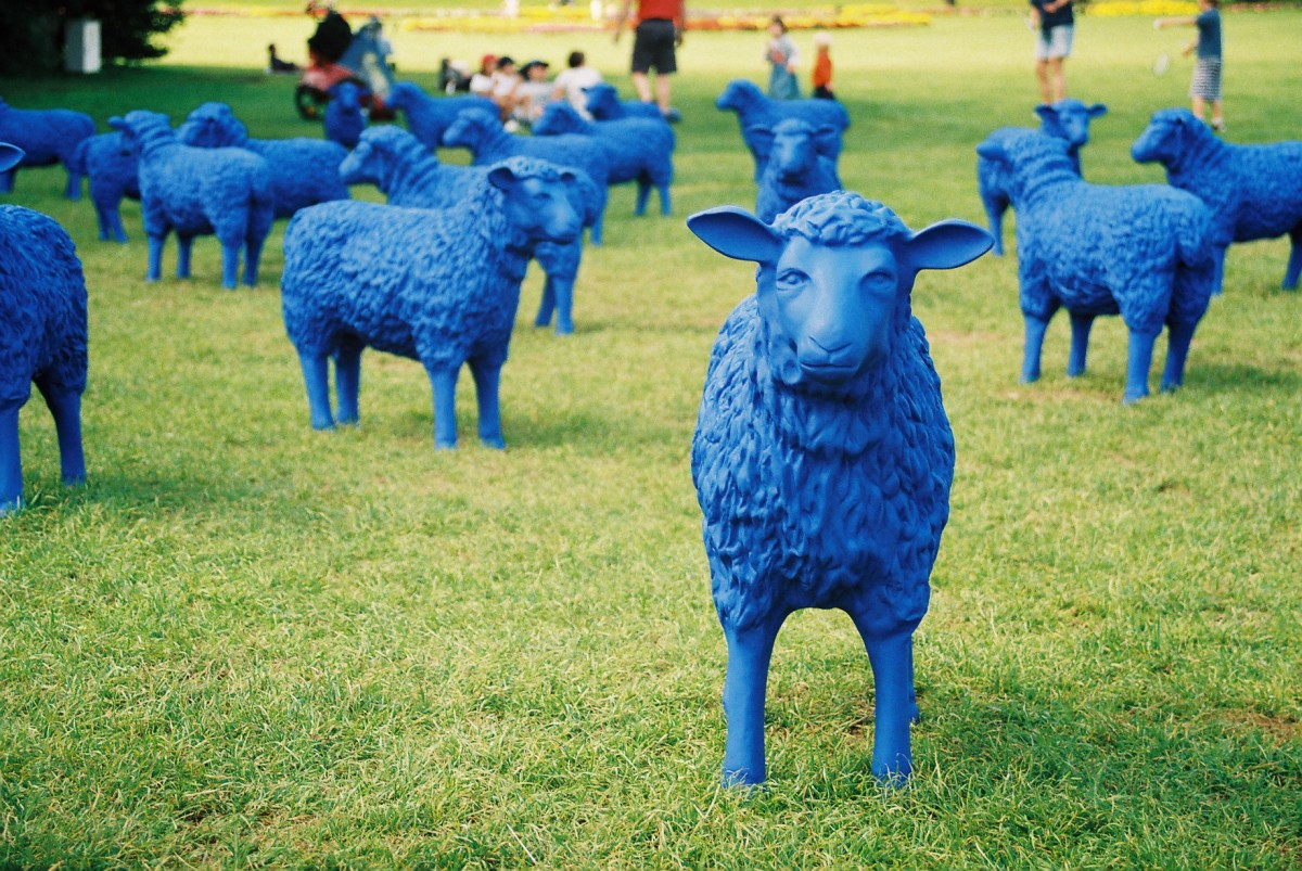 Lila Kuh gibts nur eine – aber: VIELE blaue Schafe ziehen jetzt durch Europa – am 22. September fressen sie auf der Insel Rügen!