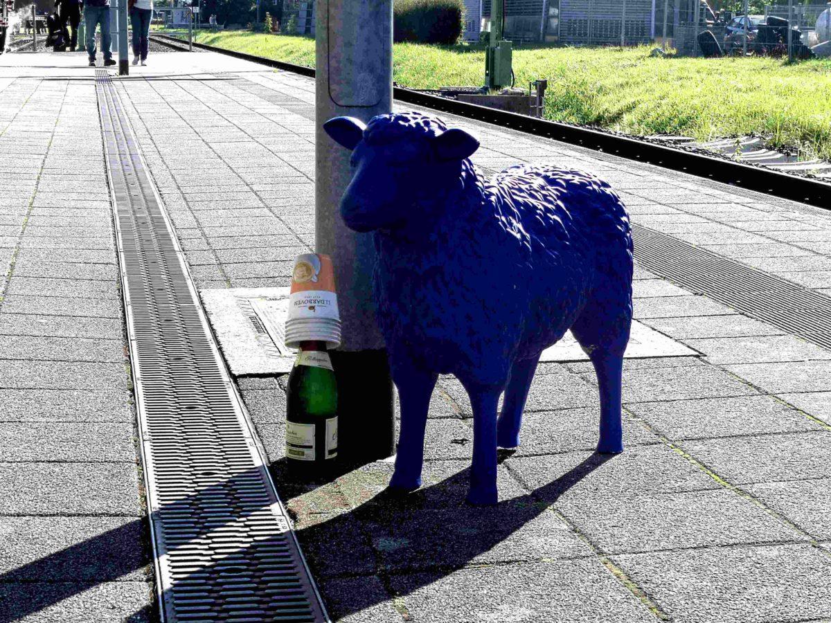 """Insel Rügen: Blaues Schaf im """"Whisky-Express"""" und kein Bus fährt da hin"""